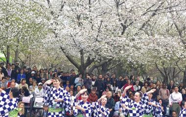 桜の下で日本文化堪能
